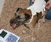 Stoffdetektor: für kleine Hunde