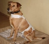 Stoffdetektor: für große Hunde
